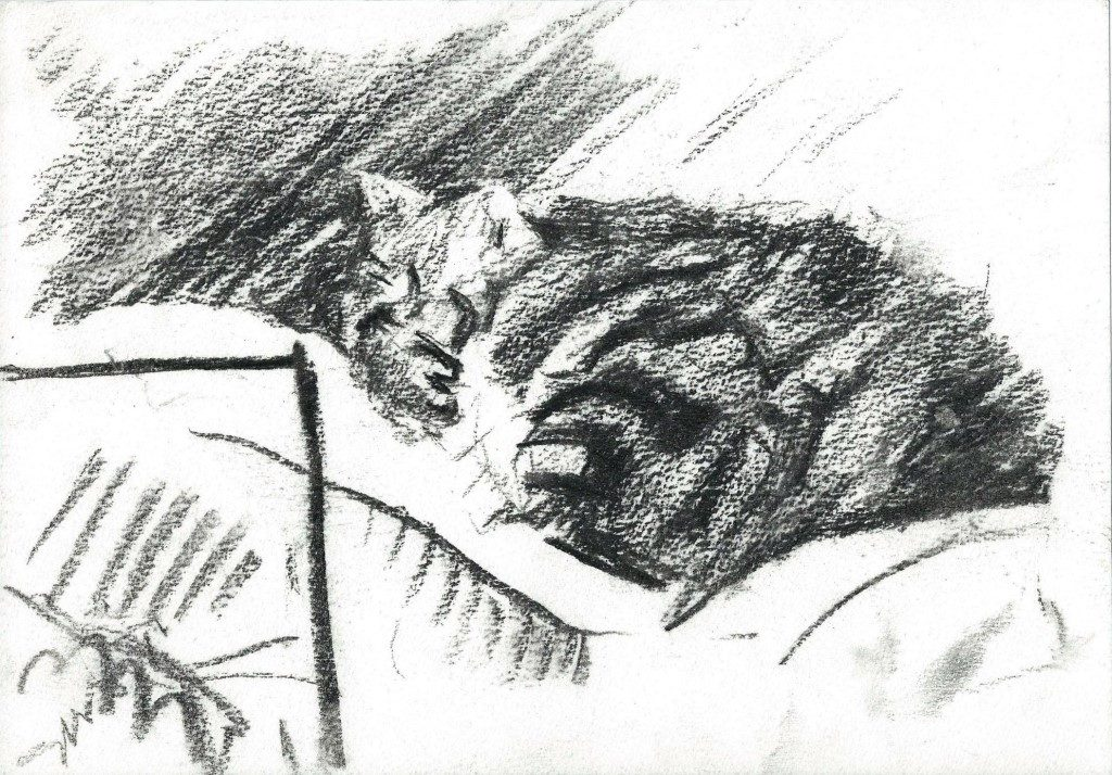 Realistic cat charcoal drawing