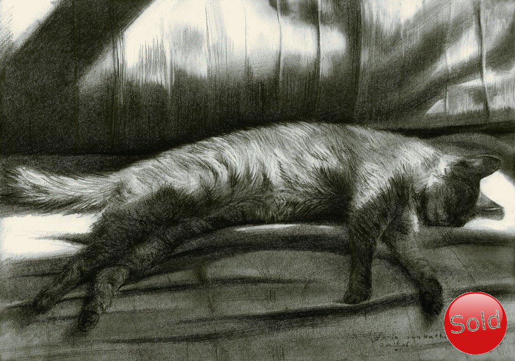 Realistic pussycat graphite pencil drawing