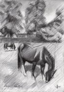 impressionistic horse graphite pencil drawing thumbnail